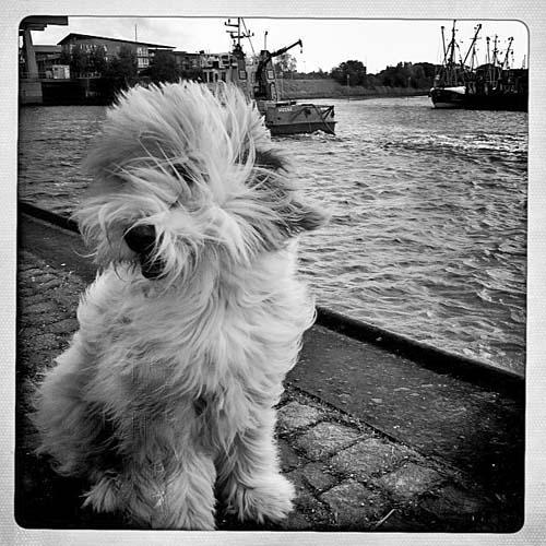 Julchen – verzweifelt im Hafen