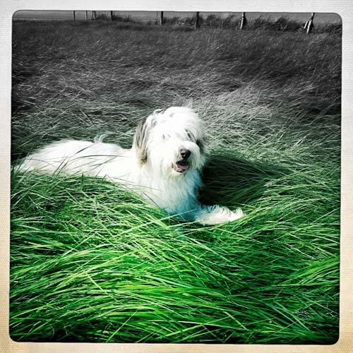 Fettes, saftiges Gras haben die Dithmarscher!