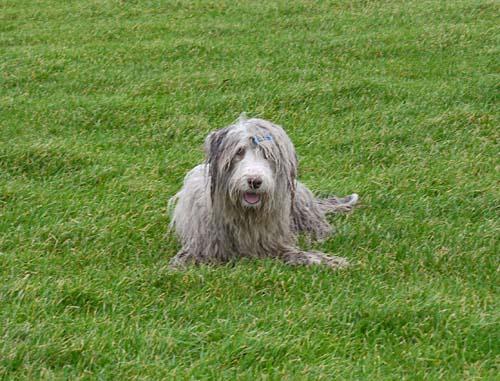 Der Hund als Chamäleon: Julchen nach der Schlammschlacht