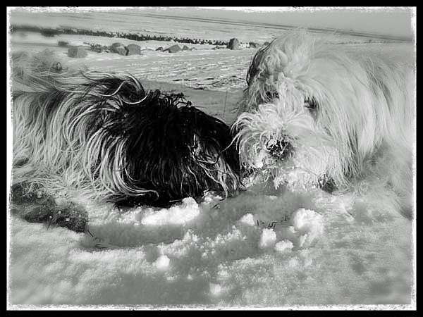 Julchen und Emil: gemeinsame Schneesache!