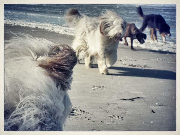 Lockerer Hundetreff am Ordinger Beach