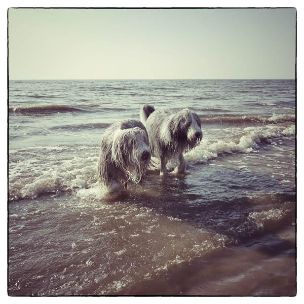 Julchen trifft die Jungs am Strand
