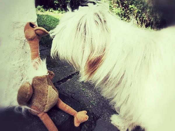 Julchen zeigt Gustavo den Sommergarten.