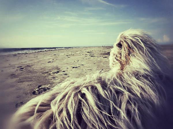 Melancholie an der Nordsee
