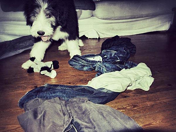 Janni sortiert die Klamotten von Monsieur neu.
