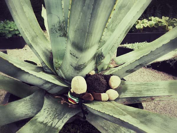 Luis testet Aloe Vera zum Chillen...