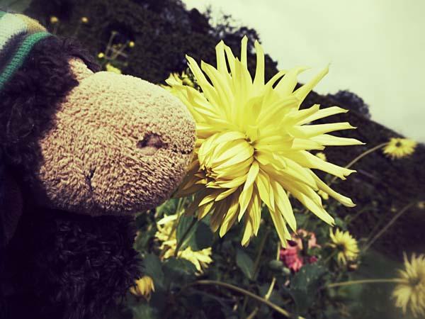Der Duft der Blumen vernebelt Luis die Sinne.
