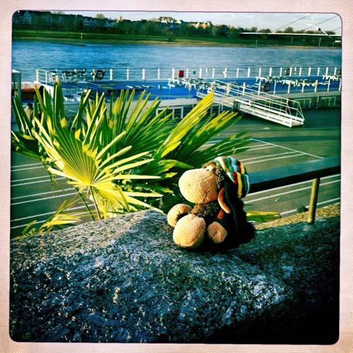Sonne und Palmen: viel mehr braucht ein Rastaschaf nicht!