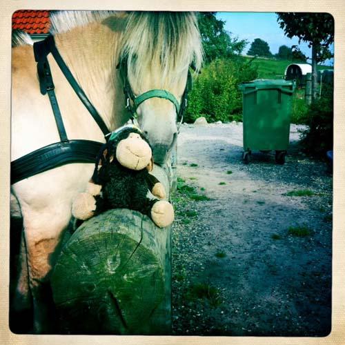 Luis macht die Bekanntschaft eines Fjordpferdes.