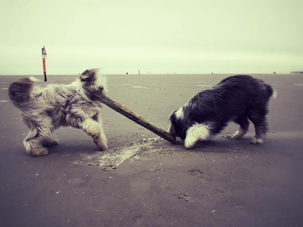 Teamwork: für Julchen und Janni ist kein Stock zu groß.
