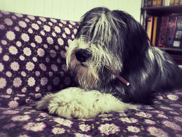 Mr. Cool: Janni mit Hundespaghetto im Maul