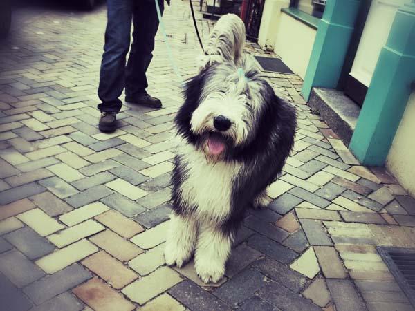 Der verlorene Hund: Janni allein unterwegs.