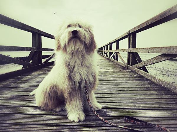 Tagtäglich wartet Julchen auf der Seebrücke.