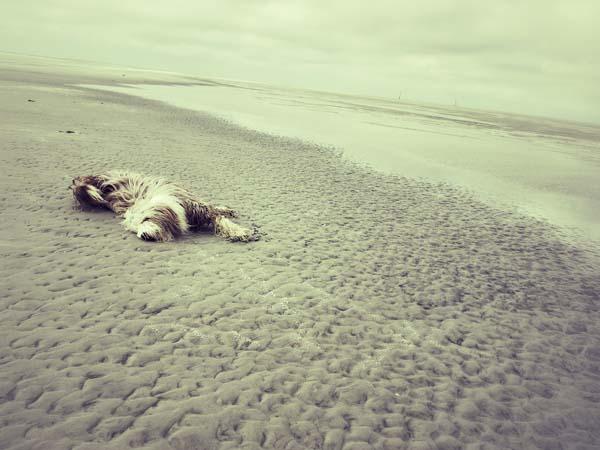 Wälzen im Sand: ein Julchen im Glück.