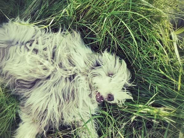 Kopfüber ins Gras: eine Herrlichkeit!