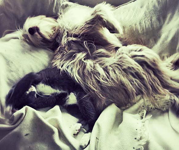 Die optimale Schlafstellung mit Katertier.