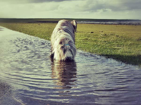 Der Herbst ist da: Wasser an jeder Ecke.