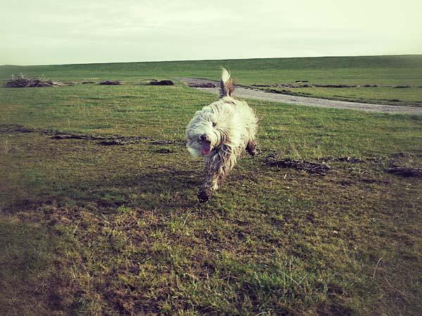 Endlich konnte man sich wieder frei bewegen – ohne Schafe!