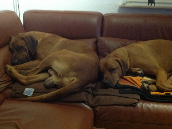 Suri und Dayo auf der Couch.