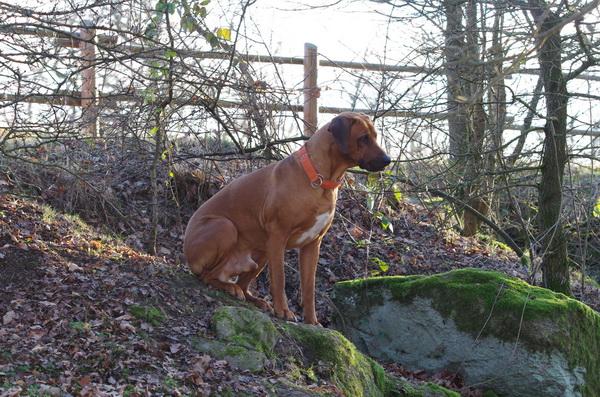 Im Wald ist es so schön, findet Dayo.