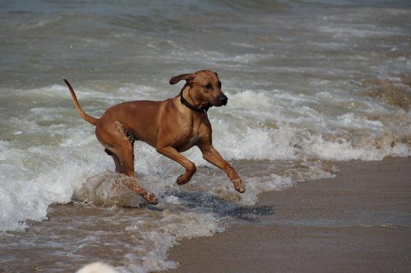 Dayo liebt das Meer, Strände, Schwimmen.