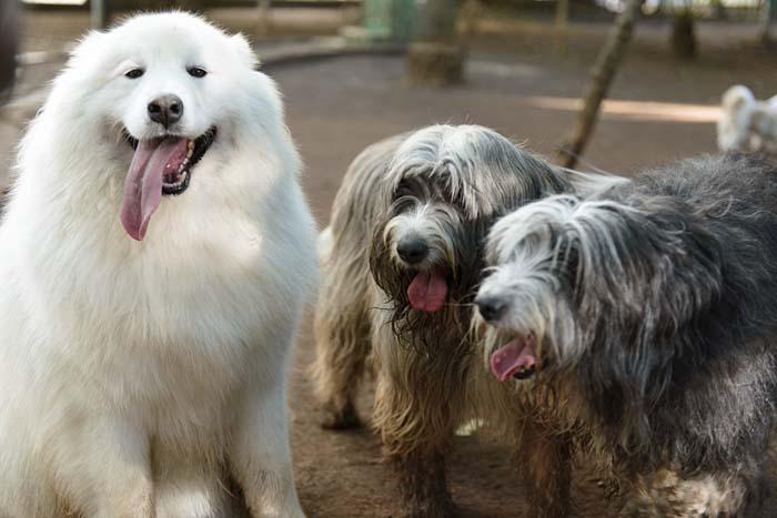 Beste Freunde: Rufus und seine Brüder ©Maria Jamile