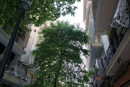 Gassenbaum