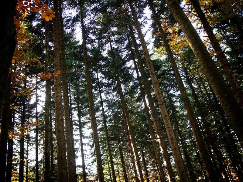 Tagsüber ist der Wald ja ganz nett.