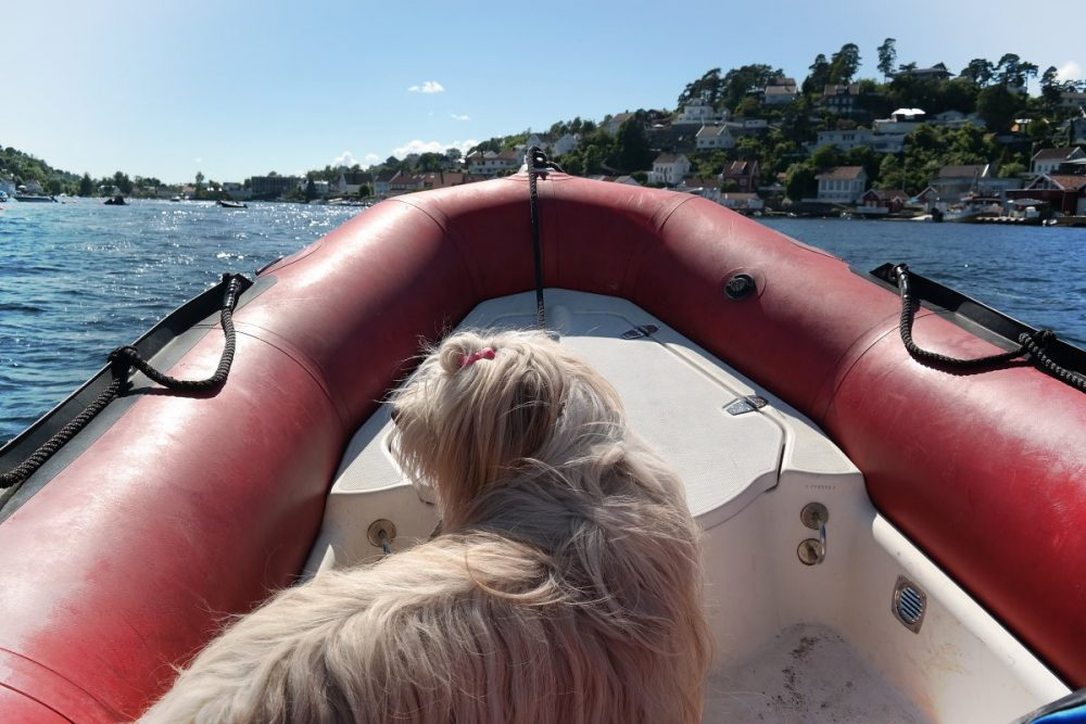 Skipper-Hund Julchen
