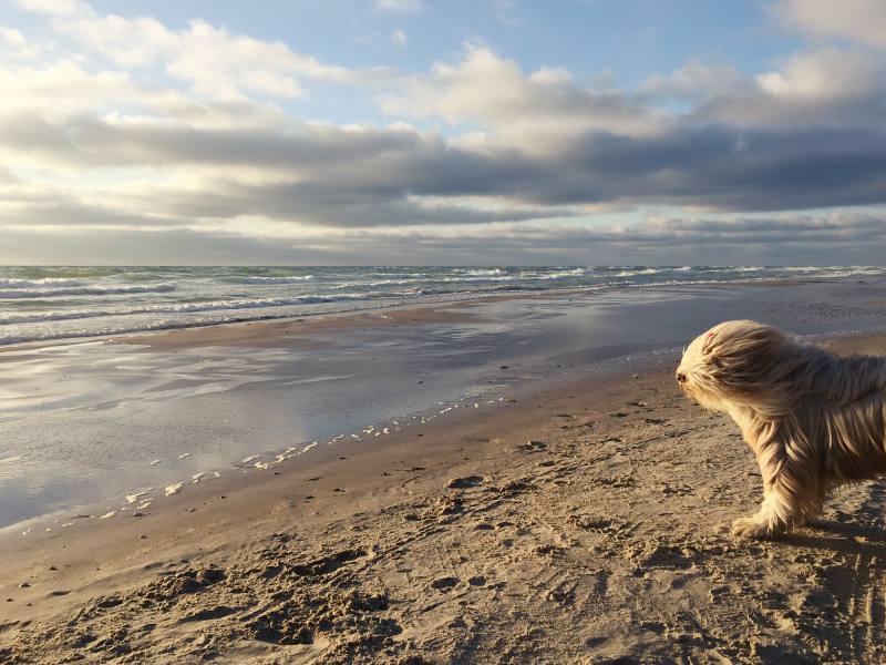 Windfest am Strand