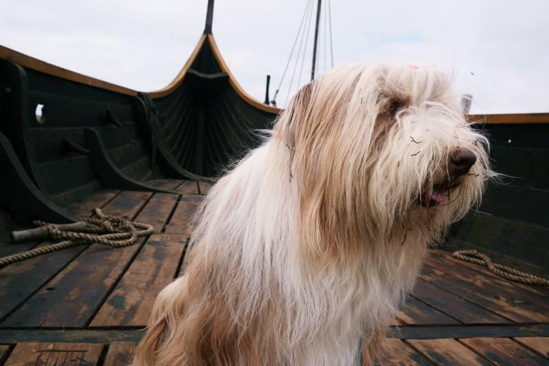Wikingerschiff Bork