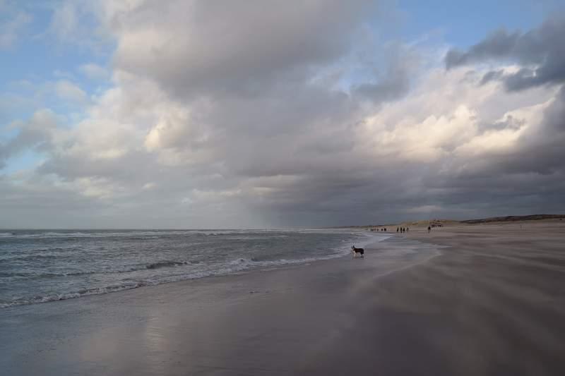 Hund allein am Strand