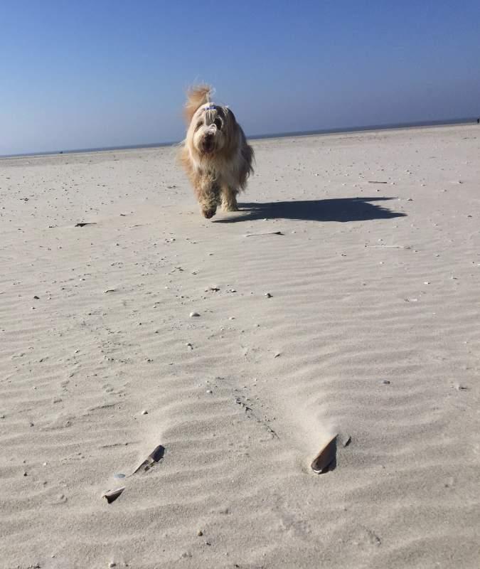 Dog Ambassador