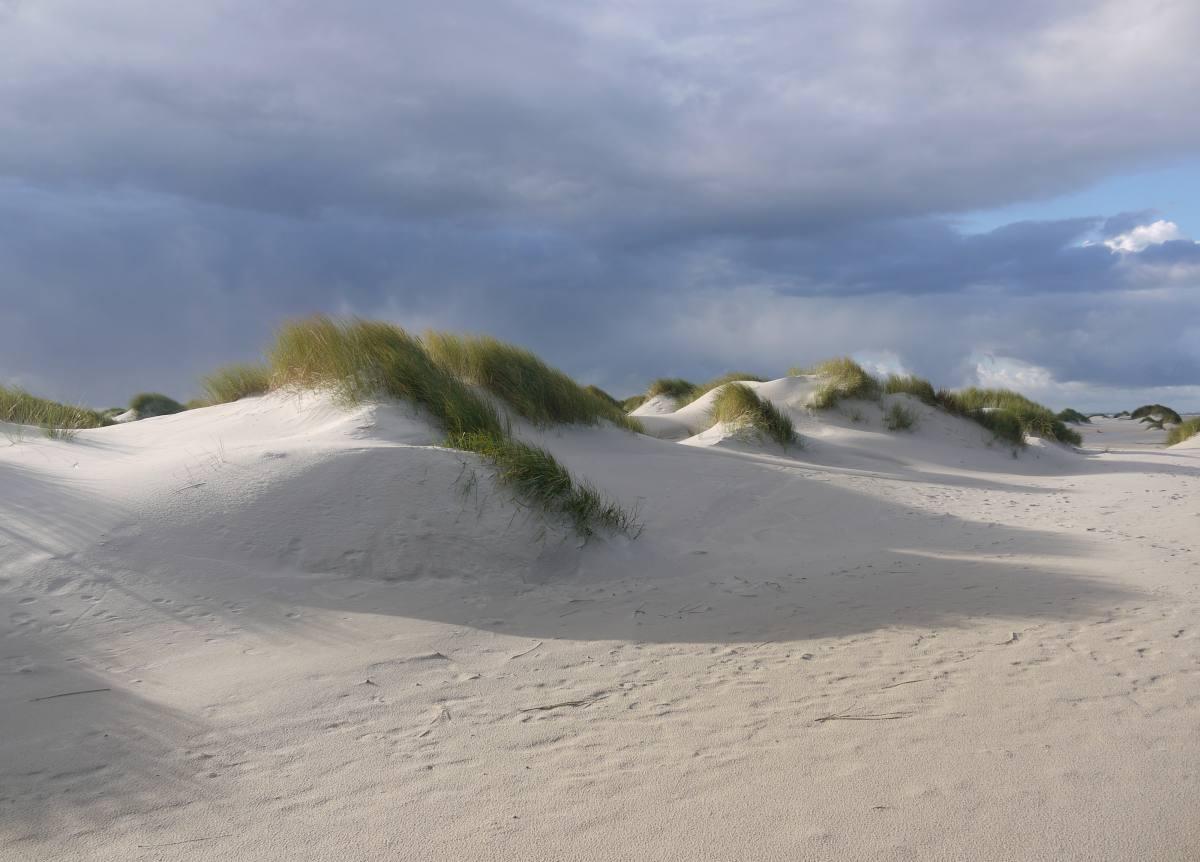 In den Dünen von Amrum