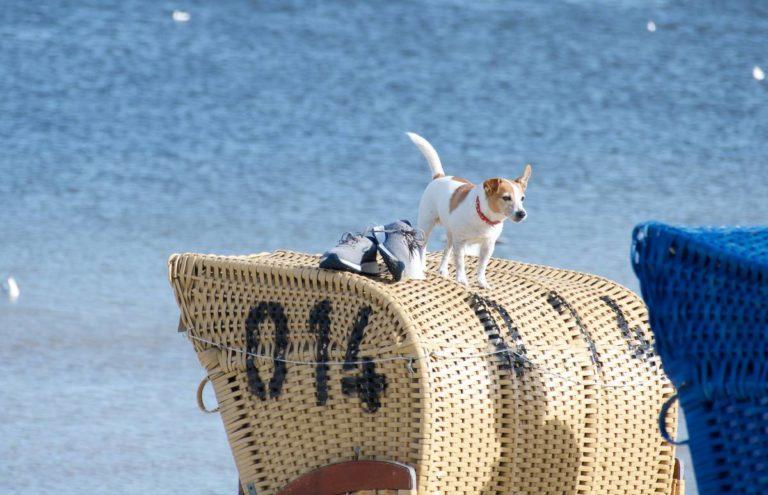 Hund Strandkorb