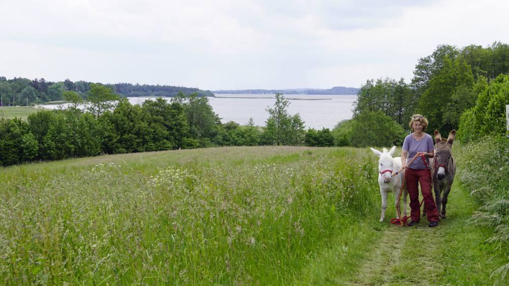 Wandern mit Esel