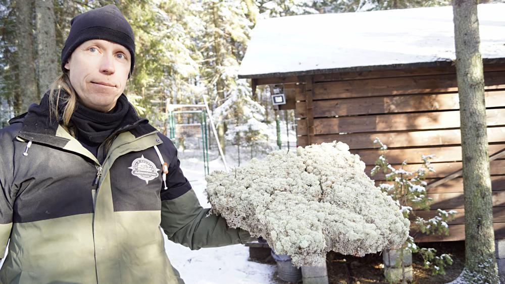 Flechten aus Lappland