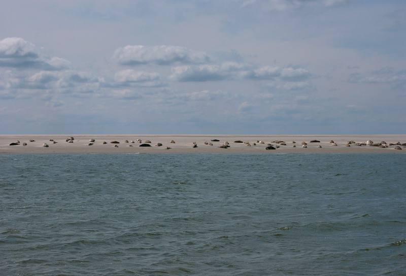 Chillen auf der Sandbank