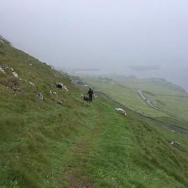 Wanderung mit Schaf