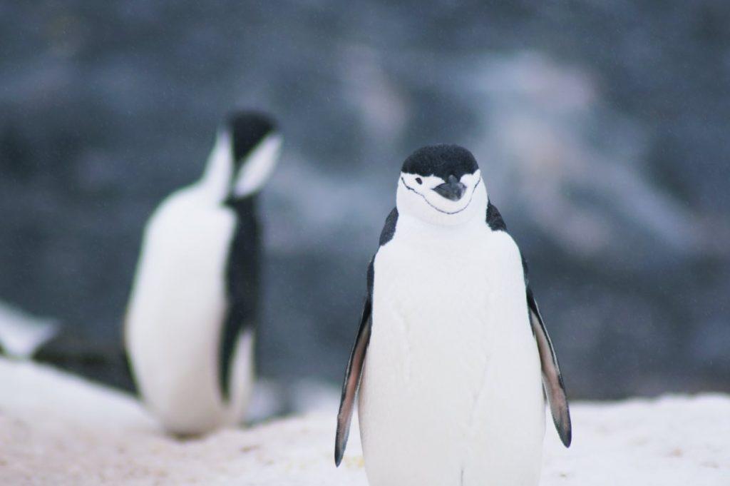 Keep calm and smile like a penguin.