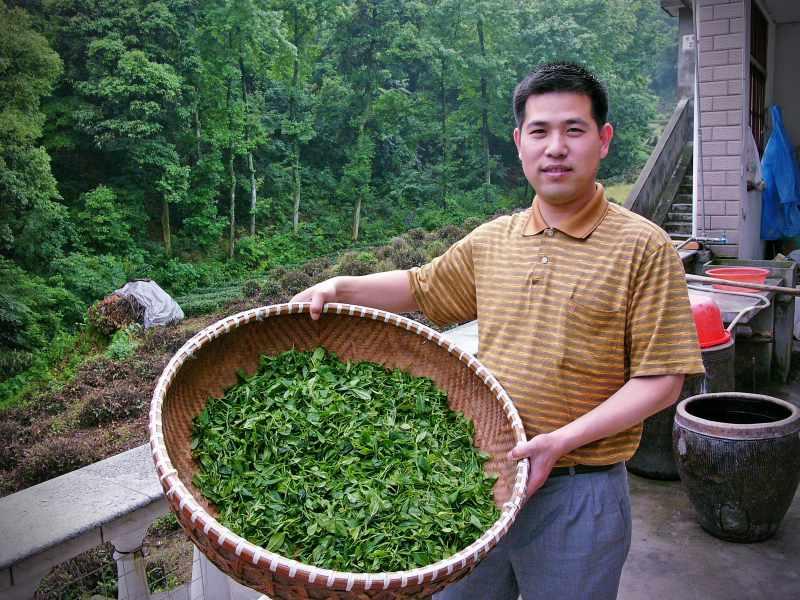 Zu Besuch beim Teebauern