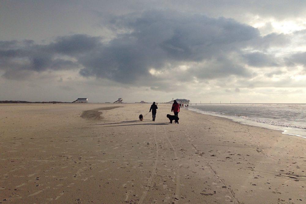Hunde am Strand in St. Peter-Ording