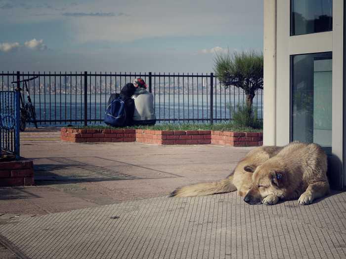 Der Hund bleibt.