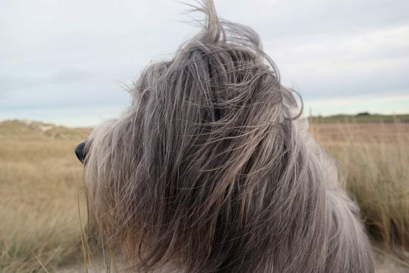 Frisch vom Friseur