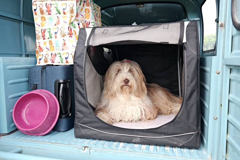 Hund Julchen und Acadiane Emilia on tour