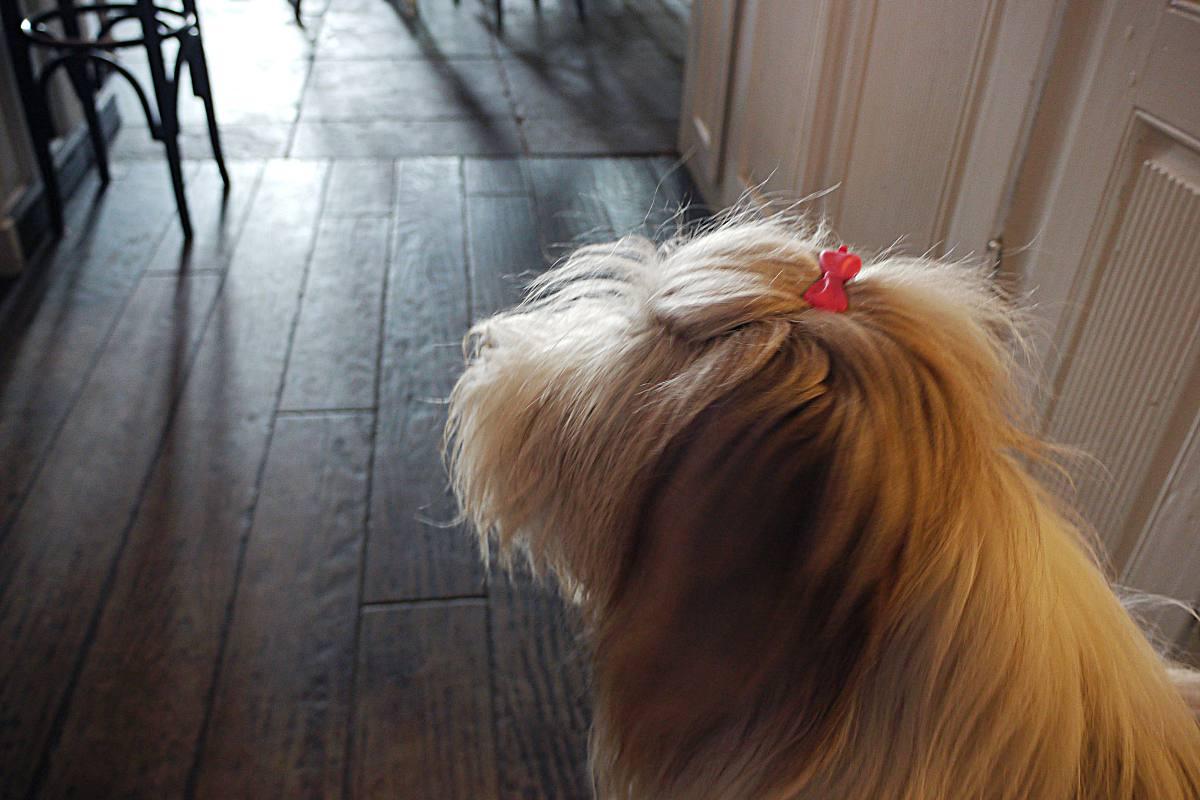 Als Hund im Café