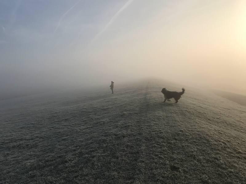 Nebel am Deich
