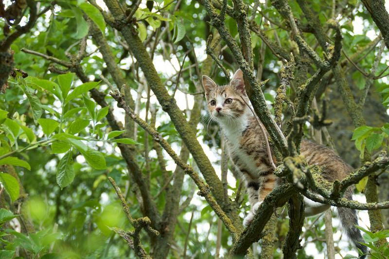 Matilda auf dem Baum
