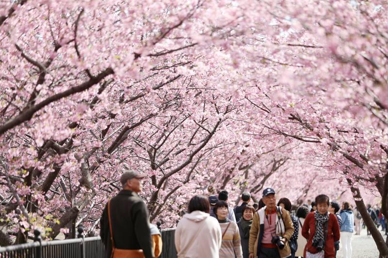 Kirschblüte Japan © Jiji Press