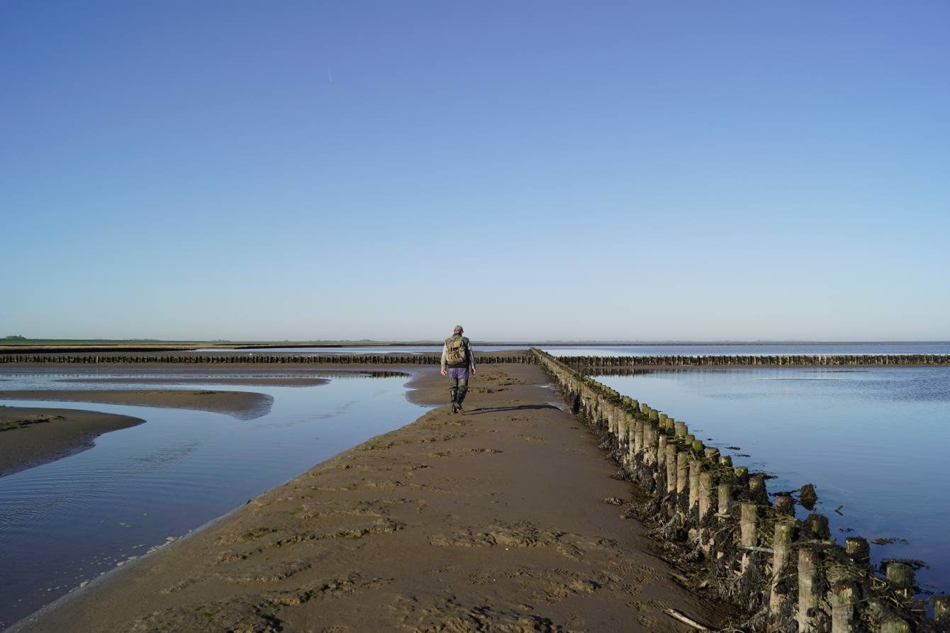 Küstenschutz vor Uelvesbüll